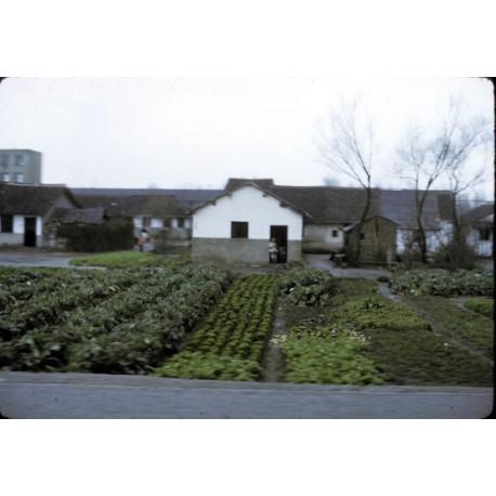 La Chine de 1974 vue par Roland Barthes : pays ou paysage ? de Qingya Meng